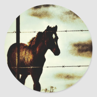 Rustic Horse Colt Foal and Barbed Wire Classic Round Sticker