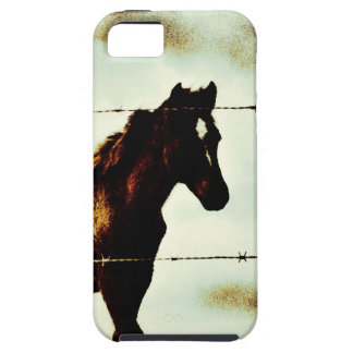 Rustic Horse Colt Foal and Barbed Wire iPhone SE/5/5s Case