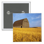 Rustic old barn in mature wheat field in the 2 2 inch square button