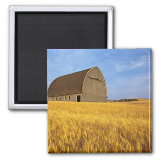 Rustic old barn in mature wheat field in the 2 fridge magnet