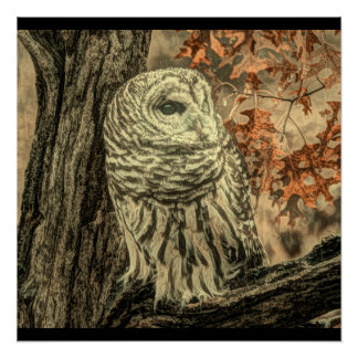 Rustic Owl In Tree Poster