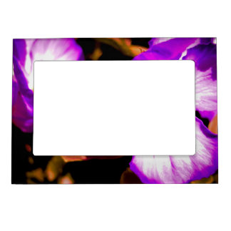 Rustic Purple and White Pansy Magnetic Frame
