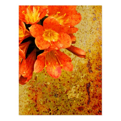 Rustic Red Flowers Postcard