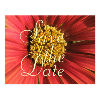 Rustic Red Wedding Postcard