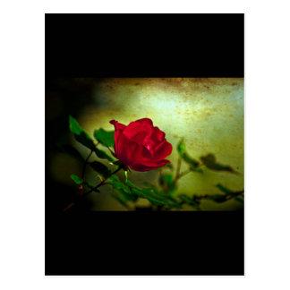 Rustic Romatic Rose Postcard