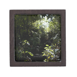 Rustic staircase/footpath in forest, sunlight gift box