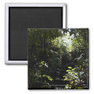 Rustic staircase/footpath in forest, sunlight 2 inch square magnet