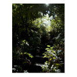 Rustic staircase/footpath in forest, sunlight postcard