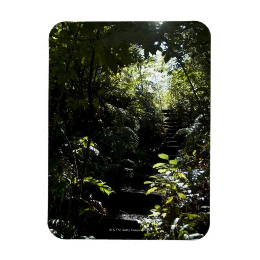 Rustic staircase/footpath in forest, sunlight rectangular photo magnet