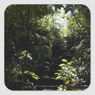 Rustic staircase/footpath in forest, sunlight square sticker