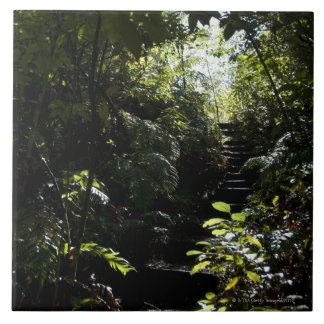 Rustic staircase/footpath in forest, sunlight ceramic tile