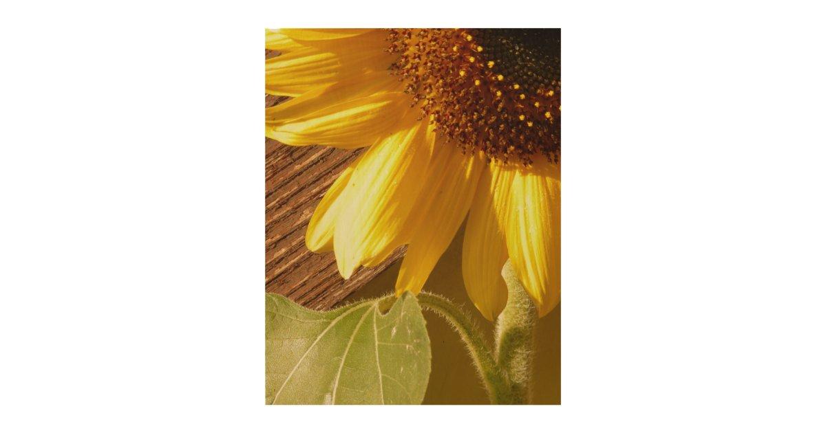 Rustic Sunflower On Wood Wood Wall Decor Zazzle Com