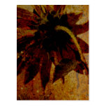 Rustic Sunflower Post Card