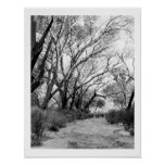 Rustic Trail with Trees Posters