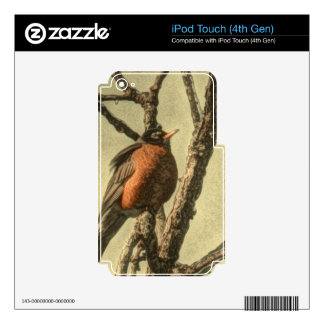 Rustic Tree branches  Michigan State Bird Robin iPod Touch 4G Skins