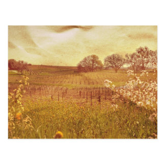 Rustic Vineyard in Napa Valley California Postcard
