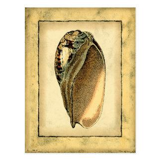 Rustic Vintage Seashell Postcard