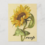 "[ Thumbnail: Rustic Vintage Style Sunflower ""RSVP"" Postcard ]"