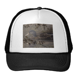 Rustic wild duck on pond hats