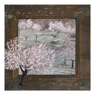 Rustic wood pink blossoms large 24x24 poster print