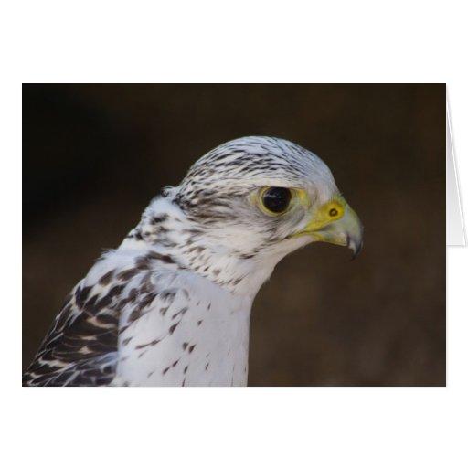 Rusticolus de Falco Tarjeta De Felicitación
