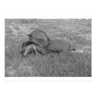 Rustlers Saddle.JPG Postcard