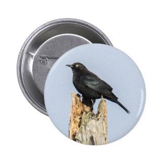 Rusty Blackbird Button