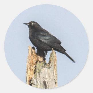 Rusty Blackbird Classic Round Sticker