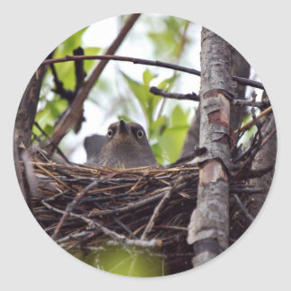 Rusty Blackbird Female On Nest Round Stickers