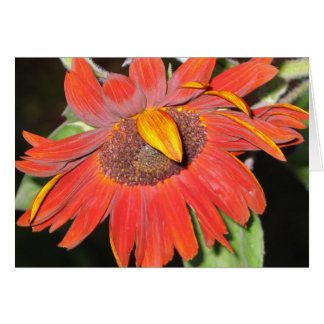 Rusty Sunflower Greeting Cards