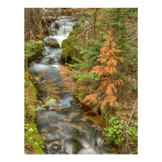 Rusty The Pine Tree and The Flowing Stream Letterhead