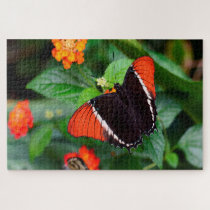 Rusty Tipped Page Butterfly . Jigsaw Puzzle