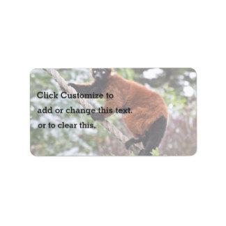 Rutina diaria de un Lemur Etiqueta De Dirección