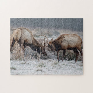 Rutting Roosevelt Elk Antlers locked Puzzle