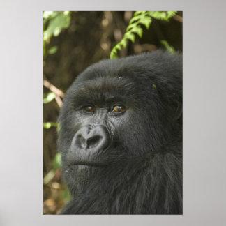 Rwanda parque nacional de los volcanes Montaña 2 Impresiones