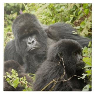 Rwanda, parque nacional de los volcanes. Montaña Azulejo Cuadrado Grande