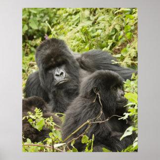 Rwanda parque nacional de los volcanes Montaña Impresiones