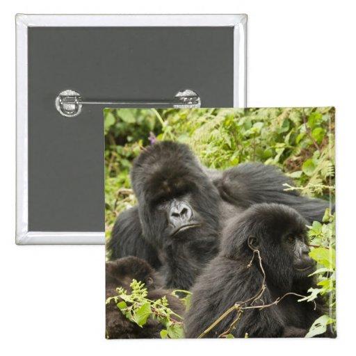 Rwanda, parque nacional de los volcanes. Montaña Pin Cuadrada 5 Cm