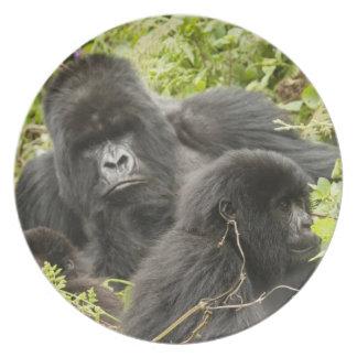 Rwanda, parque nacional de los volcanes. Montaña Plato
