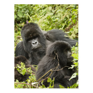 Rwanda, parque nacional de los volcanes. Montaña Tarjeta Postal