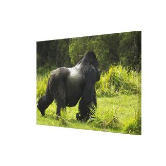 Rwanda, Volcanoes National Park. Mountain 2 Canvas Print