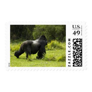 Rwanda, Volcanoes National Park. Mountain 2 Stamps