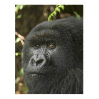 Rwanda, Volcanoes National Park. Mountain 2 Postcard