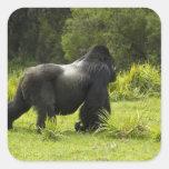 Rwanda, Volcanoes National Park. Mountain 2 Sticker