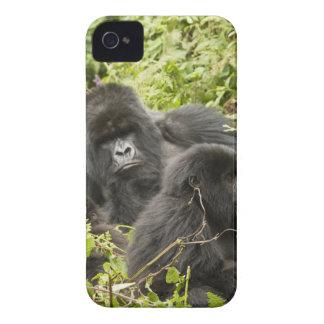 Rwanda, Volcanoes National Park. Mountain Case-Mate iPhone 4 Case