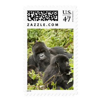 Rwanda, Volcanoes National Park. Mountain Postage