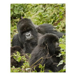 Rwanda, Volcanoes National Park. Mountain Poster