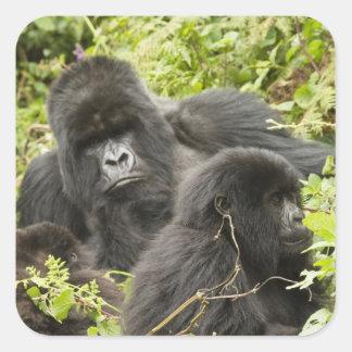 Rwanda, Volcanoes National Park. Mountain Square Sticker