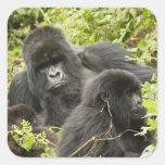 Rwanda, Volcanoes National Park. Mountain Sticker
