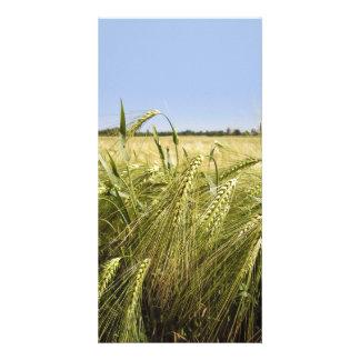 Rye Photo Card